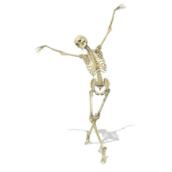 The Skeleton Technique